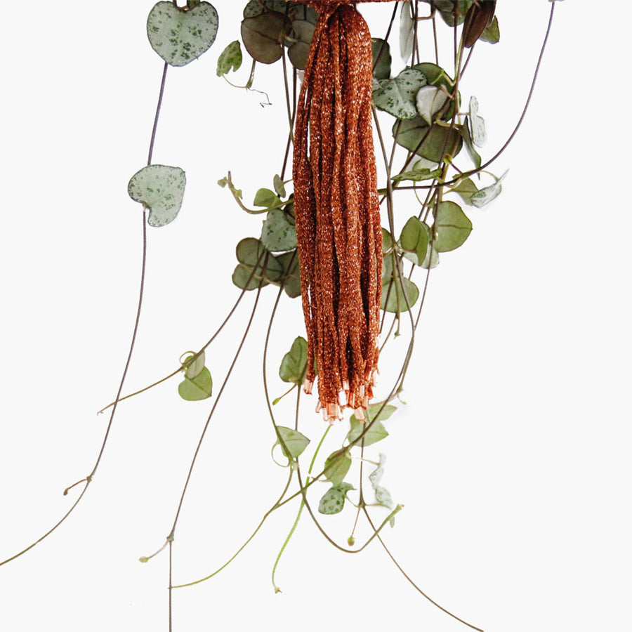 Shop Copper Macramé Plant Hanger