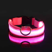 Canine Nightlight Rechargeable Safety Collar