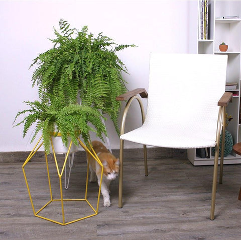 Plant stands for indoor garden - Wire plant holders
