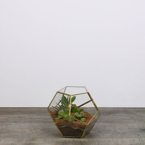 Dodecahedron terrarium small