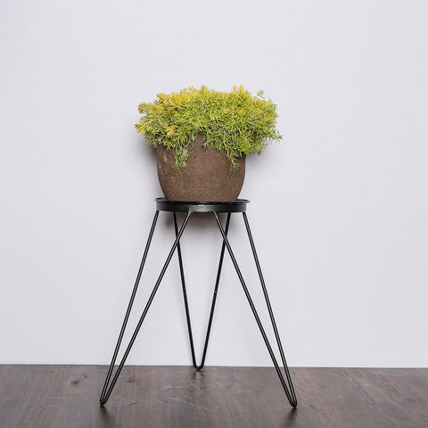 Colorful Wire plant stands -T1