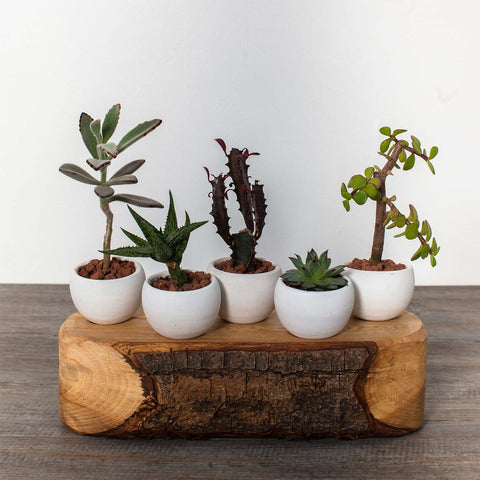 Wood and Ceramic Plant Pots