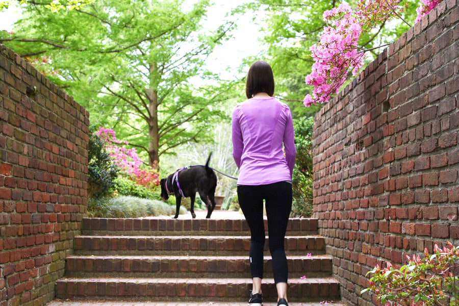 5 Things To Do With Your Dog in DC