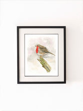 Robin Watercolour Painting, Robin Watercolour Pictures, Watercolour Robin, Watercolour Robin Pictures, Robin Bird Art
