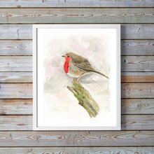 Robin Watercolour Illustration, Watercolor Robin Bird, Watercolor Robin Pictures, Watercolor Robin Paintings, Birds