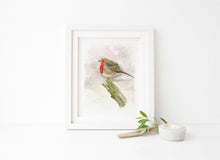 Animal Watercolour Artists UK, Robin Watercolour Wall Art, Robin Watercolour Pictures, Robin Bird Art, Robin Artwork