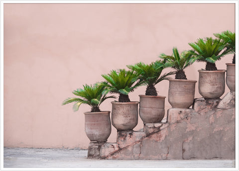 Stairs in Marrakesh. Pink palm poster.