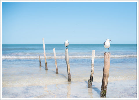 Birds on Isla Holbox | Poster - Scandinavian Prints