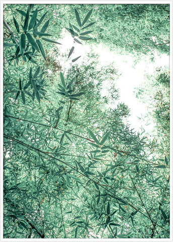 Green trees, trees poster