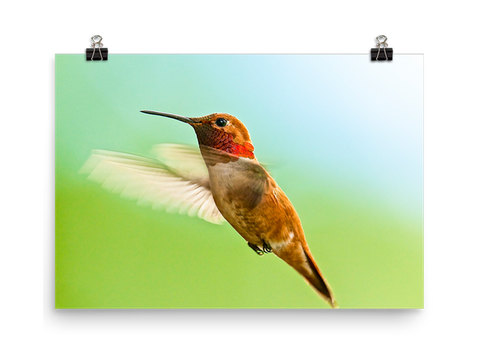 Hummingbird Prints
