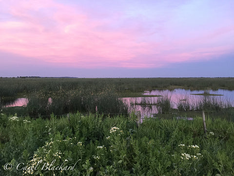 Gorgeous pink and blue sunset over reflective marsh
