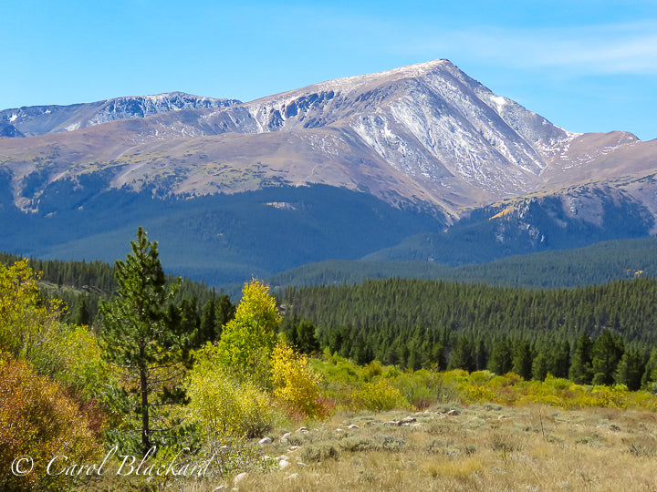 Yellow-green trees and evergreens in front of pointy Mount Elbert
