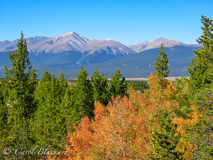 Tall mountain peak in range with pines and orange aspens