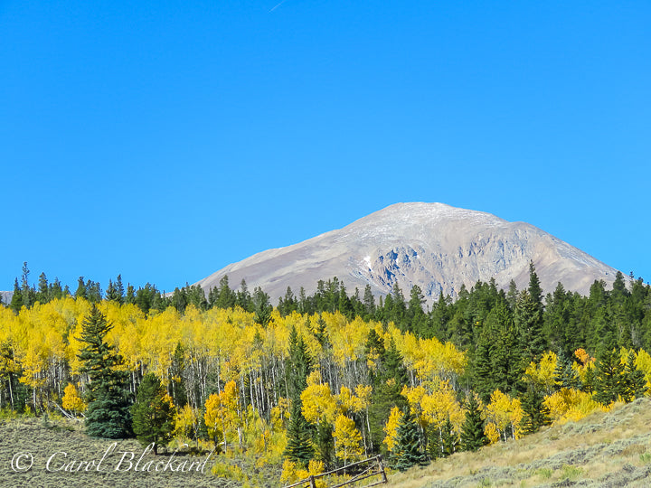 Rounded mountain peak with chartreuse aspen and pines