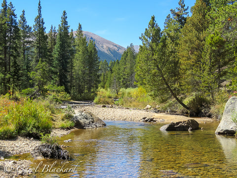 Peaceful stream with mountain and evergreen background