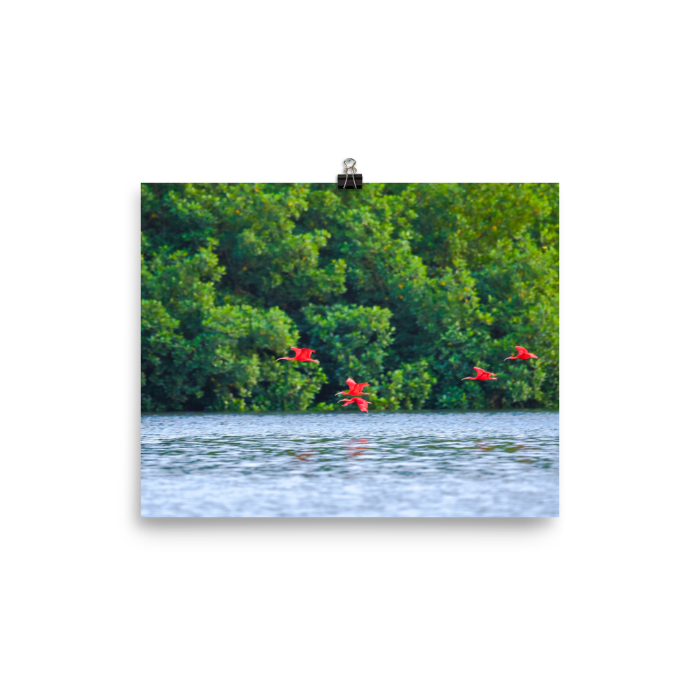 Red ibises, blue water and green trees