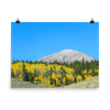Rounded mountain  with yellow aspens - print