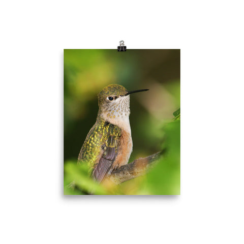 Perched Hummingbird in orange with green background