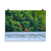 Scarlet Ibis flying low toward their roosting island - print