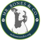 NYC based dog rescue Mr Bones and Co