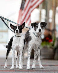 Hoadin dog accessories brand rescue models Clarence and Dixie