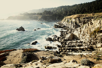 Timber Cove 4