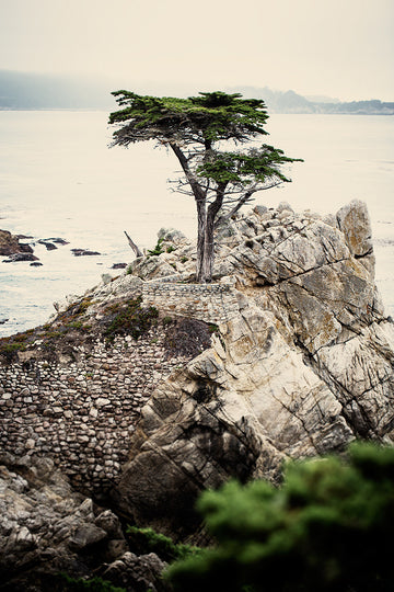 The Lone Cypress 4