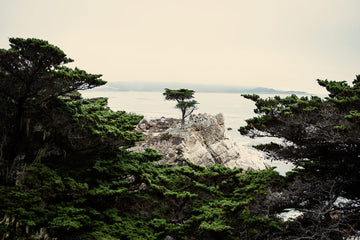 The Lone Cypress 1