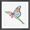 Butterfly Breakfast Framed Print