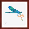 Dragonfly Lunch Framed Print