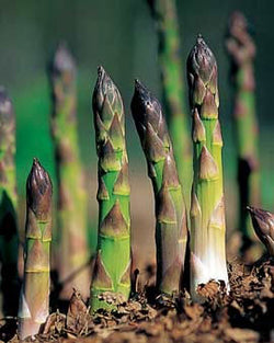 ASPARAGUS FRESH BUNCH