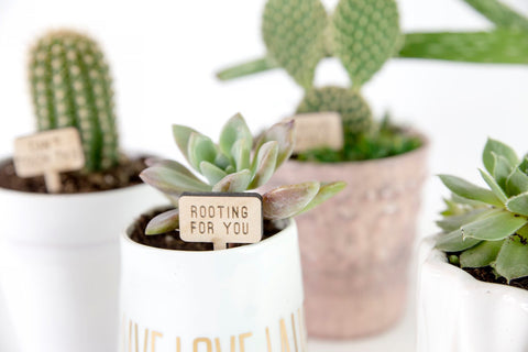 Punny Succulent Sign Set
