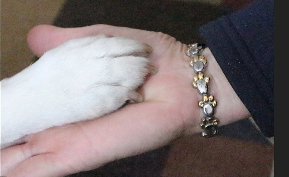 5 Elements Dog Paw Print Health Bracelet