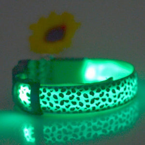 LED Dog Collar - Leopard Skin Pattern