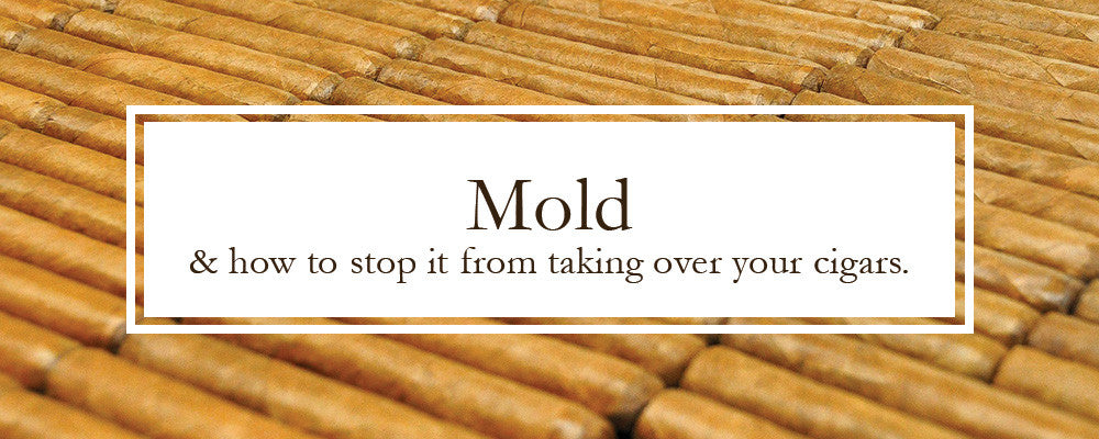 How to deal with mold taking over your humidor and cigars.