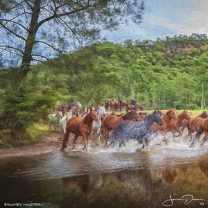 Brumby Muster I