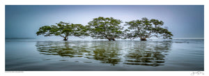 Moreton Bay Mangroves