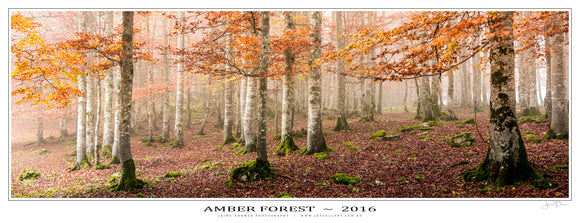 Amber Forest Poster