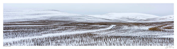 Palouse Winter