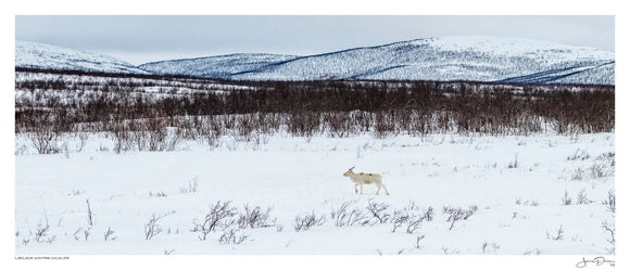 Lapland Winter Wildlife