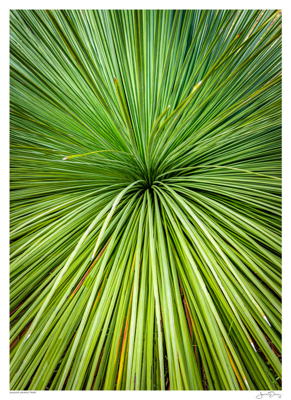 Aussie Grass Tree