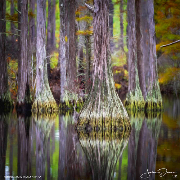 Carolina Swamp Tree IV