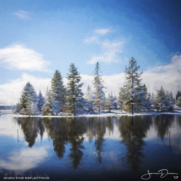 Snow Pine Reflections