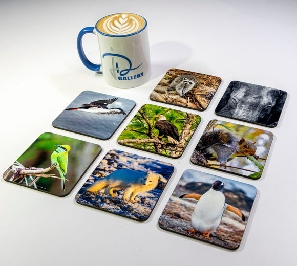 Wildlife #1 Coasters (Set of 8)