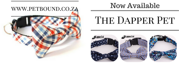 Dapper Pet Collars - Available now