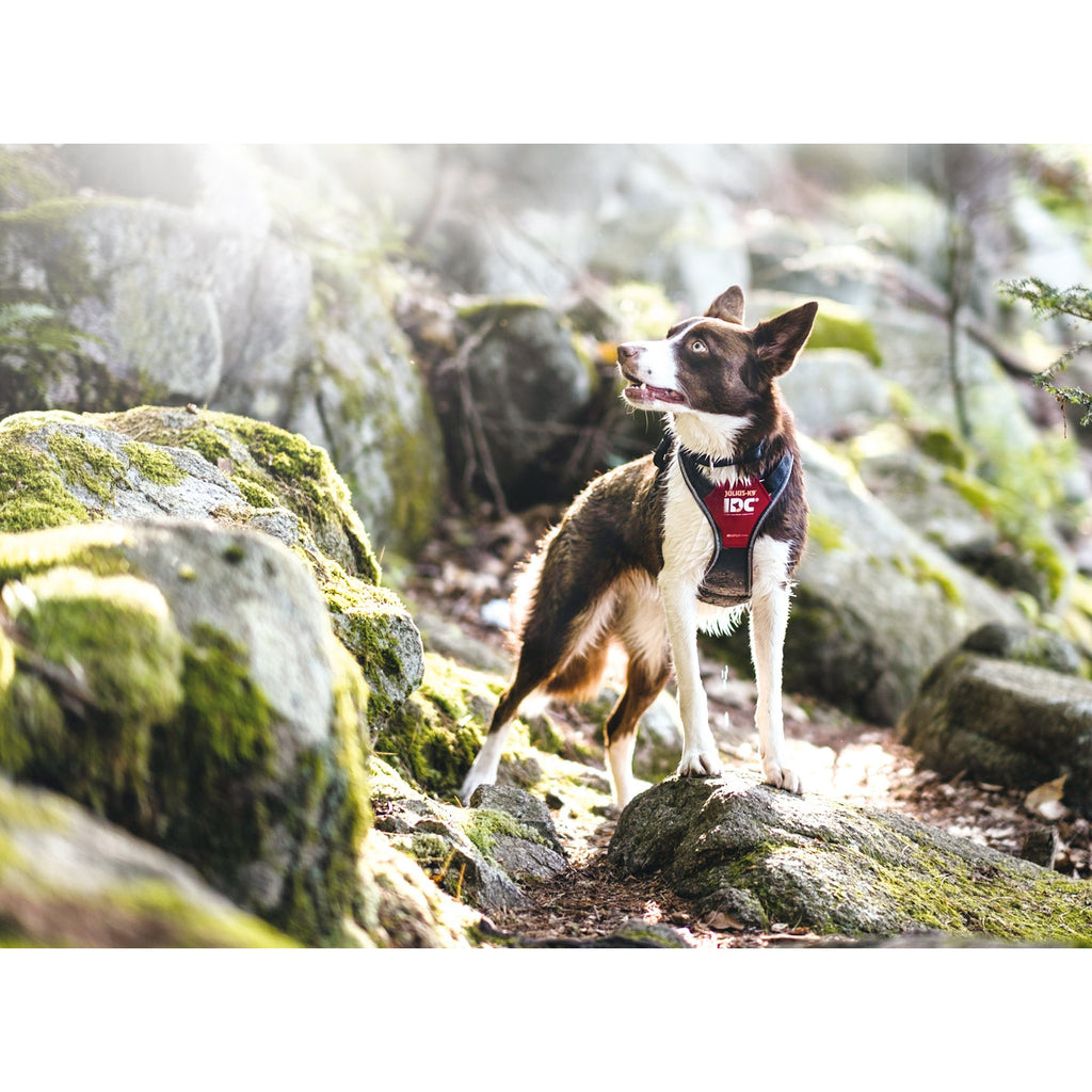Julius K9 IDC Longwalk Harness - Pet Bound Co.