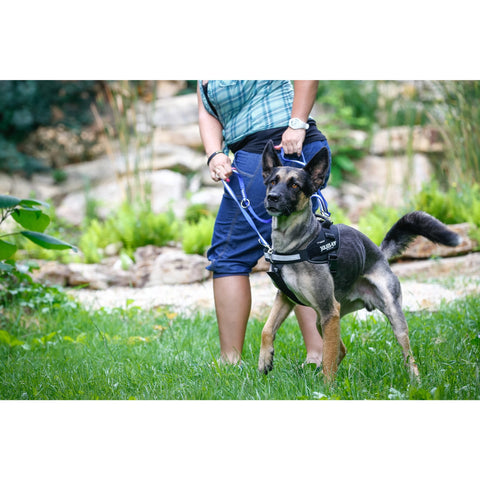 Julius K-9 Front Control Y-Belt - Size 1, 2 & 3 - Pet Bound Co.