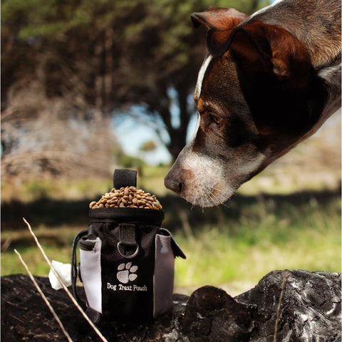 Seadog Treat Pouch - Pet Bound Co.