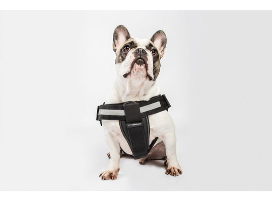 Julius K-9 Harness Chest Pad - Size 0 - Pet Bound Co.
