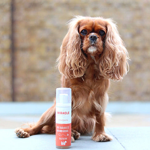 Hownd - Miracle Bright and White Colour Enhancing Shampoo - Pet Bound Co.
